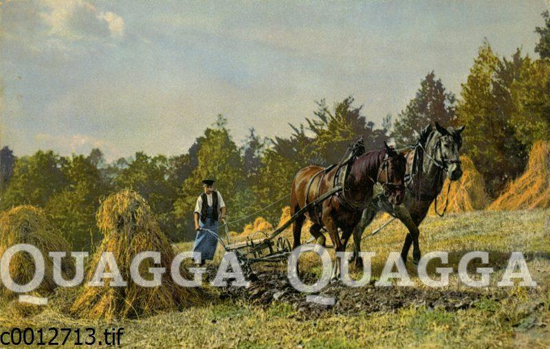 Bauer pflügt mit zwei Pferden