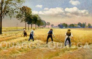 Männer schneiden Getreide mit der Sense