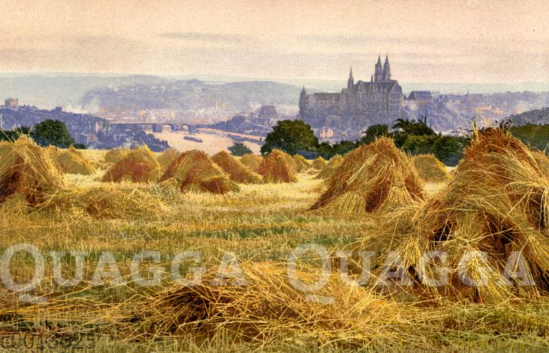 Zum Trocknen aufgestellte Getreidegarben