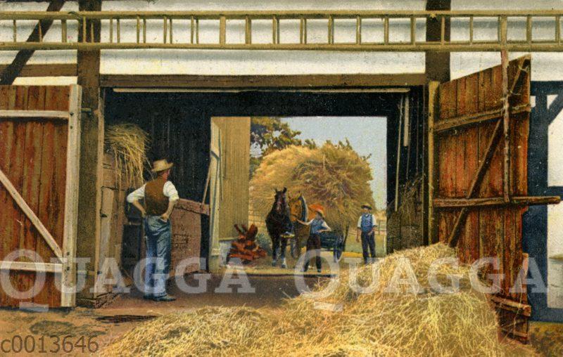 Getreideernte wird mit Perdefuhrwerk in die Scheune gefahren