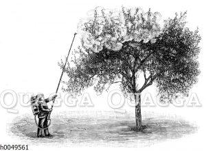 Tragbare Baumspritze der Gebrüder Holder-Metzingen