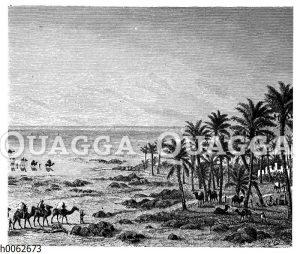 Sandwüste und Oase