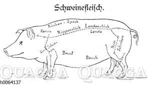 Fleischeinteilung beim Schwein