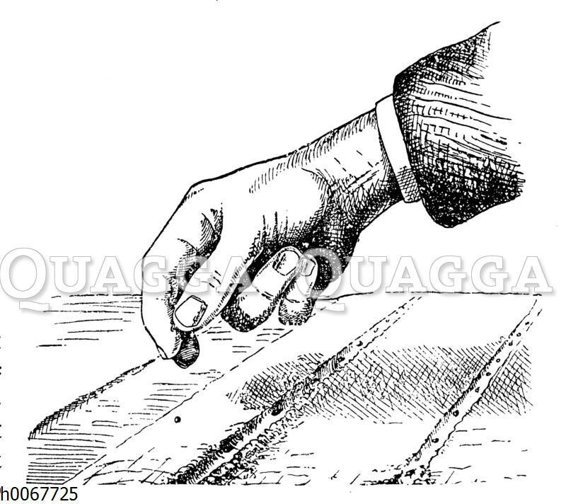 Aussaat mit der Hand