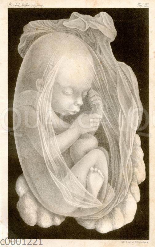 Menschlicher Fötus in der Gebärmutter