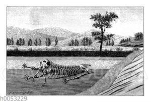 Schichten der Erdrinde mit Skelett eines Mastodons
