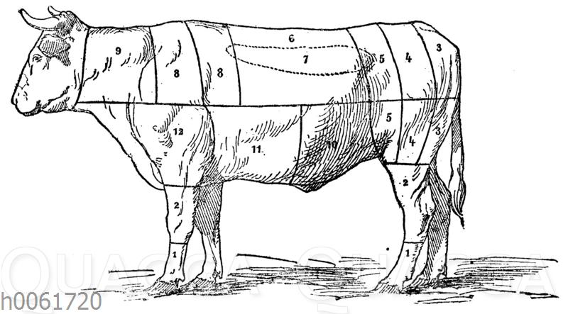 Fleischeinteilung beim Rind