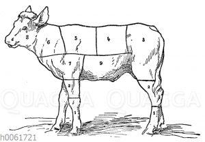 Fleischeinteilung beim Kalb