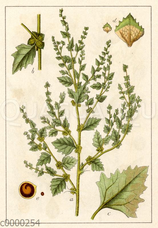 Rosen-Melde