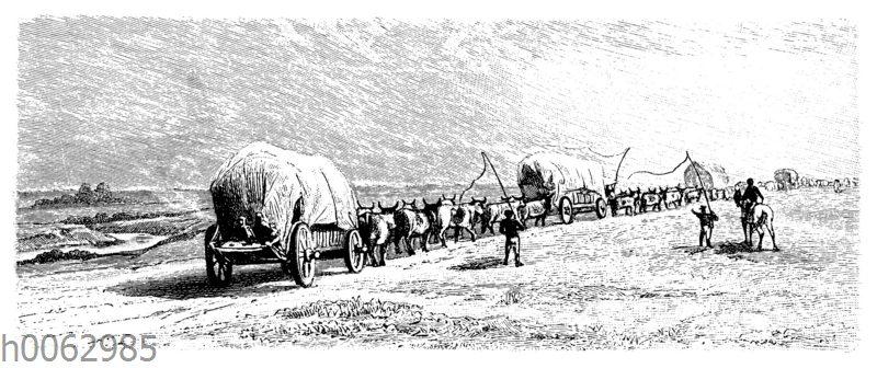 Ochsenwagen in Südafrika