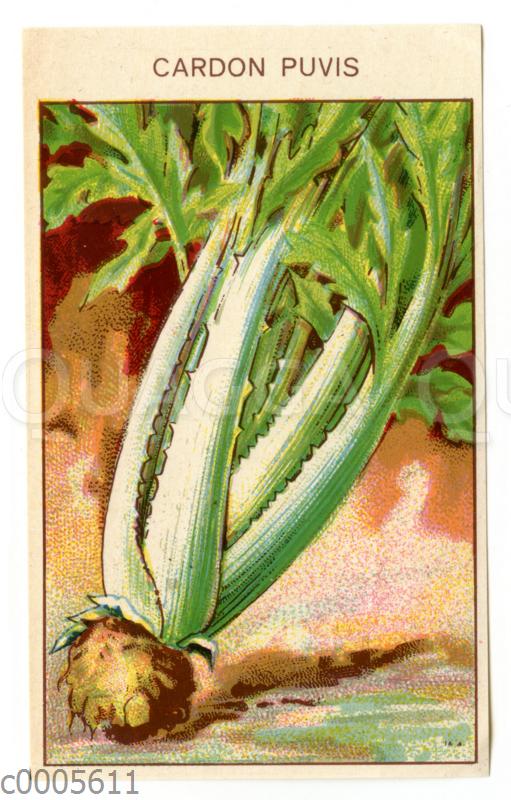 Samentütchen für Cardy