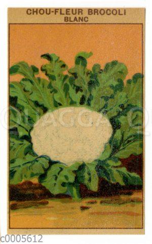 Samentütchen für Blumenkohl