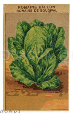 Samentütchen für Salat