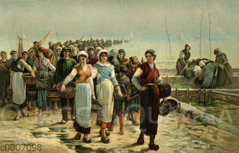 Rückkehr der Austernfischer