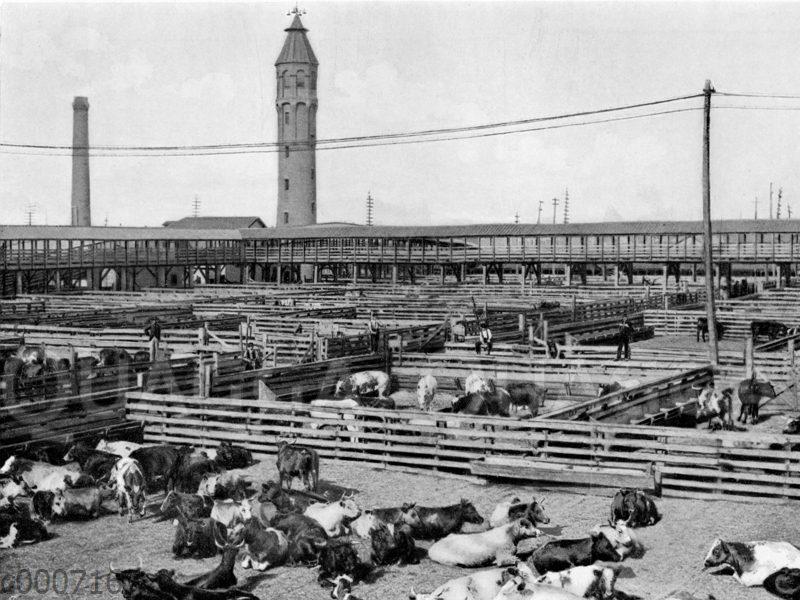 Ansicht eines Teils der Union Stockyards in Chicago