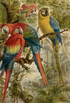 Ara-Papageien
