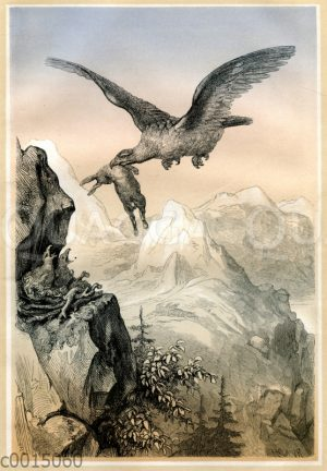 Adler im Hochgebirge