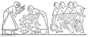 Zählung der Erschlagenen bei den Ägyptern