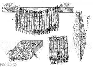Trocknen und Packen des Tabaks