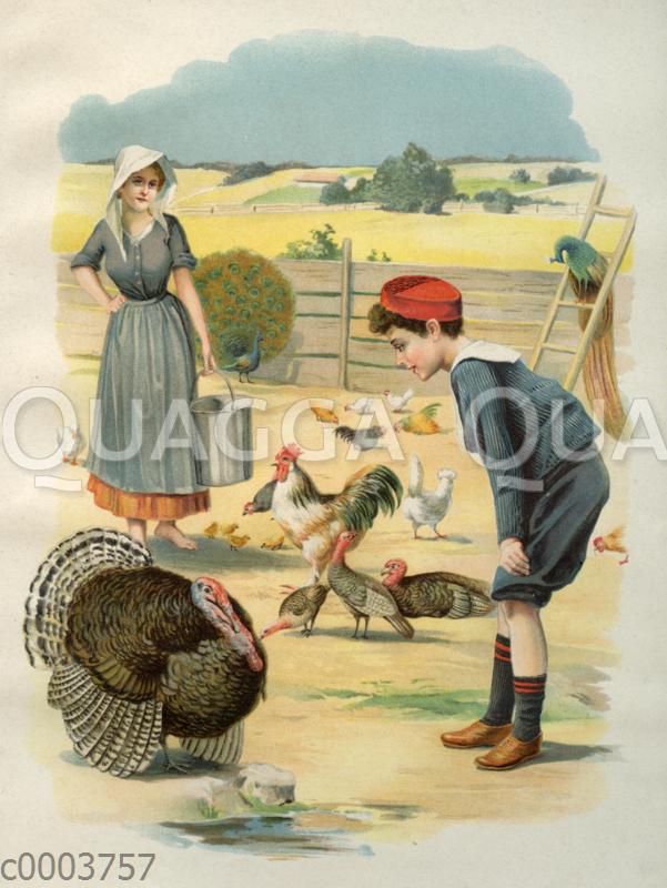 Junge im Matrosenanzug auf dem Bauernhof mit Truthahn und Haushahn