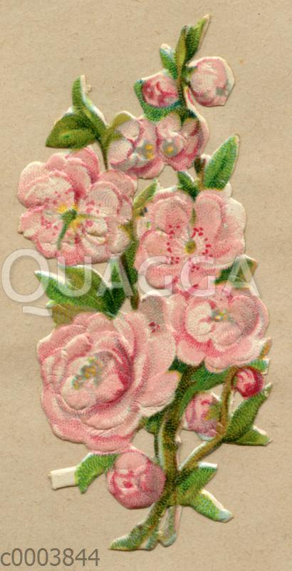 Glanzbild: Rosafarbene Kirschblüte