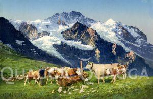 Kühe an der Tränke vor Schweizer Bergpanorama