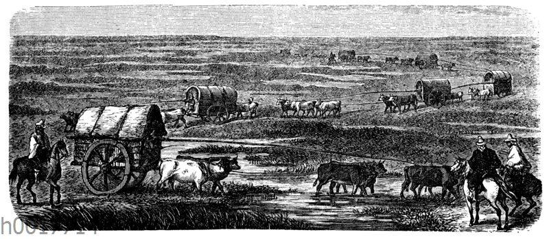 Ochsenkarawane in den Pampas