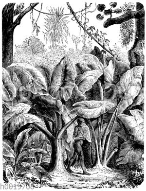 Riesenblättriges Pfeilblatt