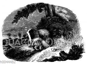 Hyänen auf Gräbern