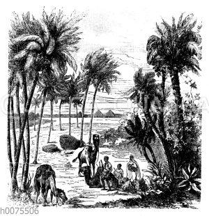Ruhepause unter Palmen