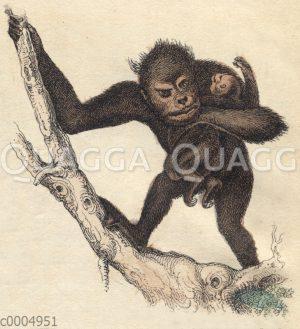 Schimpansenmutter mit Baby