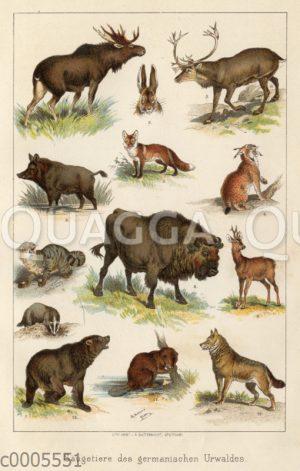 Säugetiere des germanischen Urwaldes'