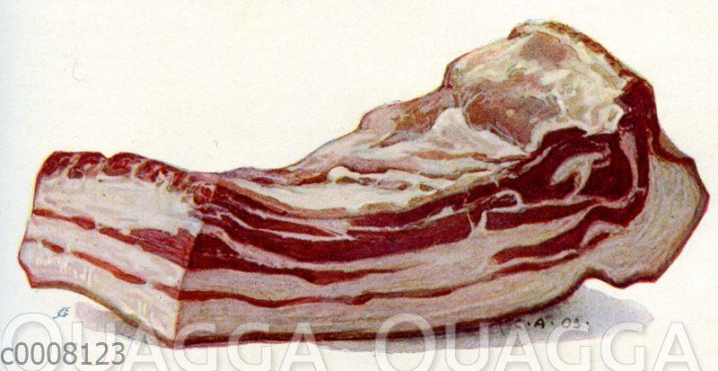 Bauchstück vom Schwein