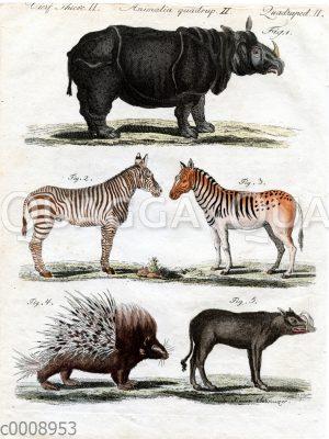 Vierfüßige Tiere: Nashorn