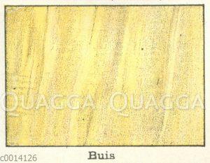 Holzart: Buchsbaum