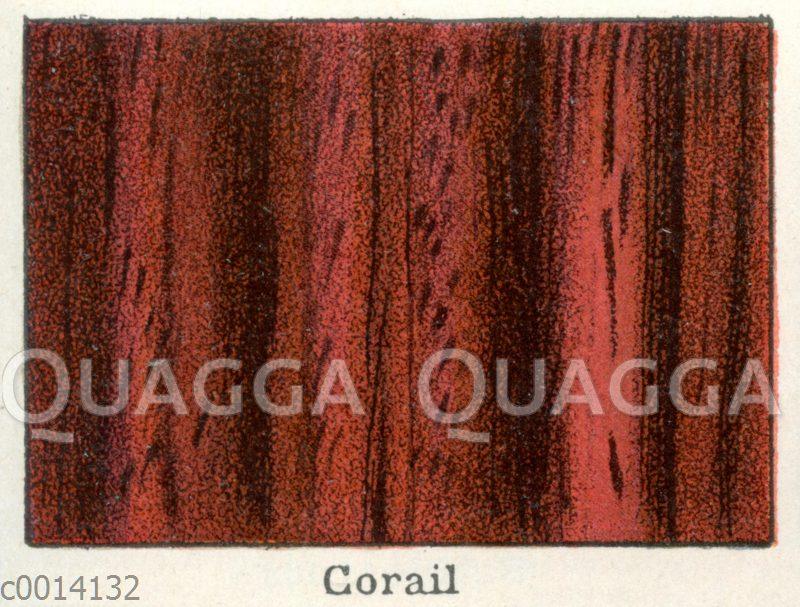 Chassalia corallioides: Holz