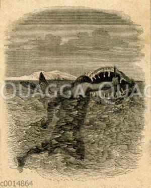 Hiaquis Indianer beim Töten eines Hais