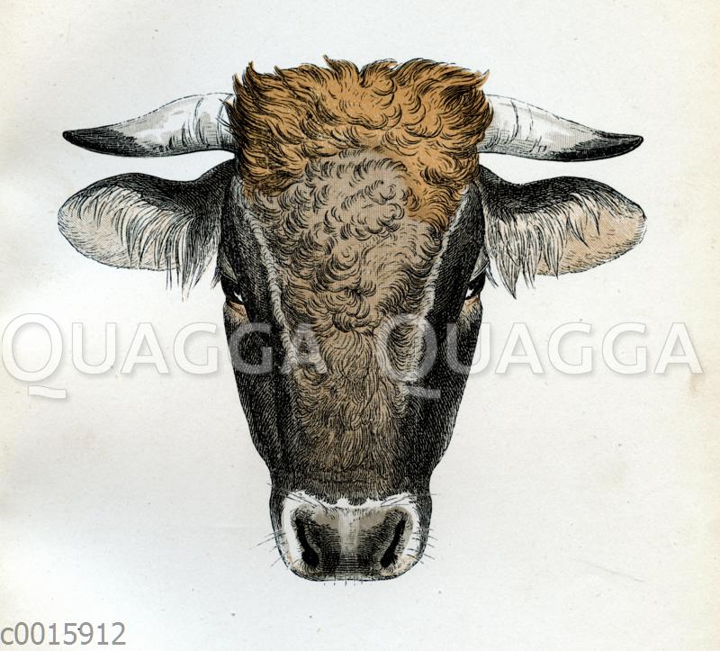 Mürztaler Stier