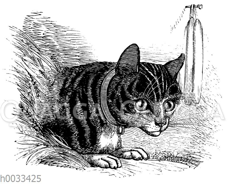 Hauskatze auf der Mäusejagd