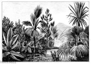 Vegetation des Eozän im Gebiet von Aix-en-Provence