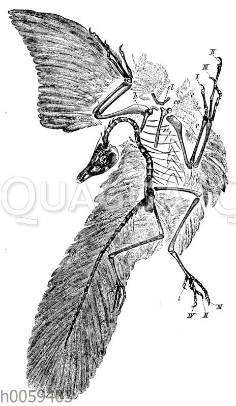Archäopteryx_