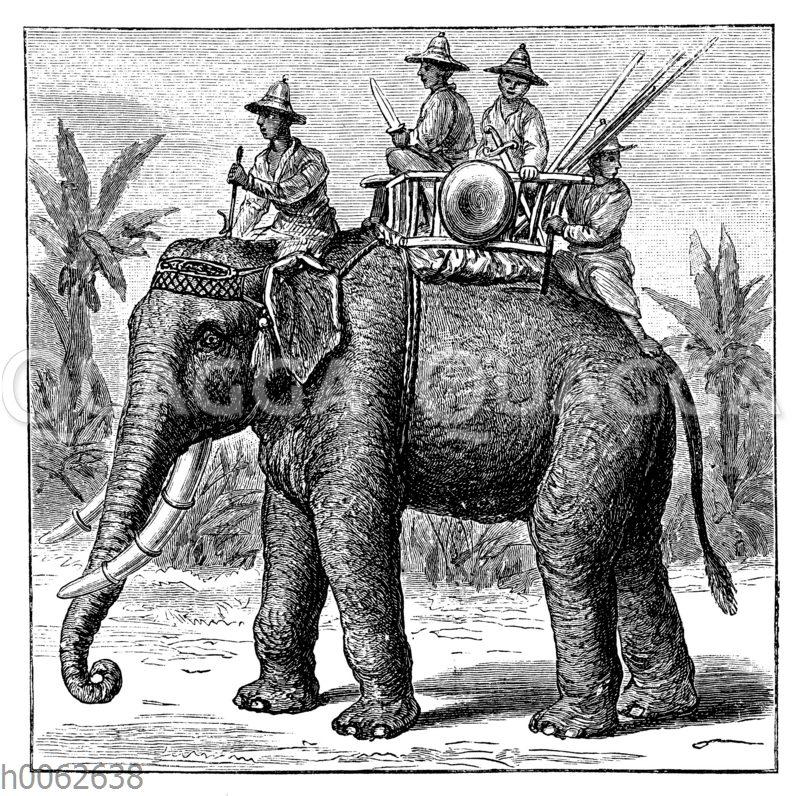 Siamesischer Kriegselefant