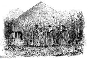 Betchuanafrauen beim Zaunflechten