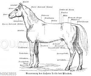 Benennung der äußern Teile des Pferdes