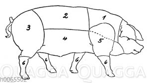 Schwein: Fleicheinteilung