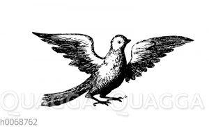 Taube als Inbegriff des heiligen Geistes oder der seligen Geister