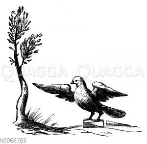Taube mit Ölbaum