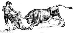Torero mit Stier