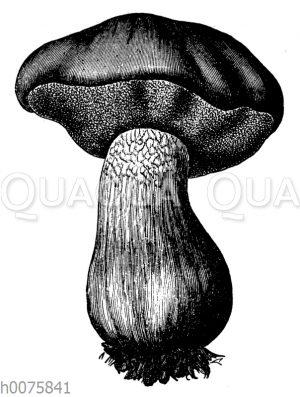 essbare Pilze