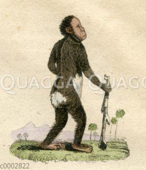 Affenmensch